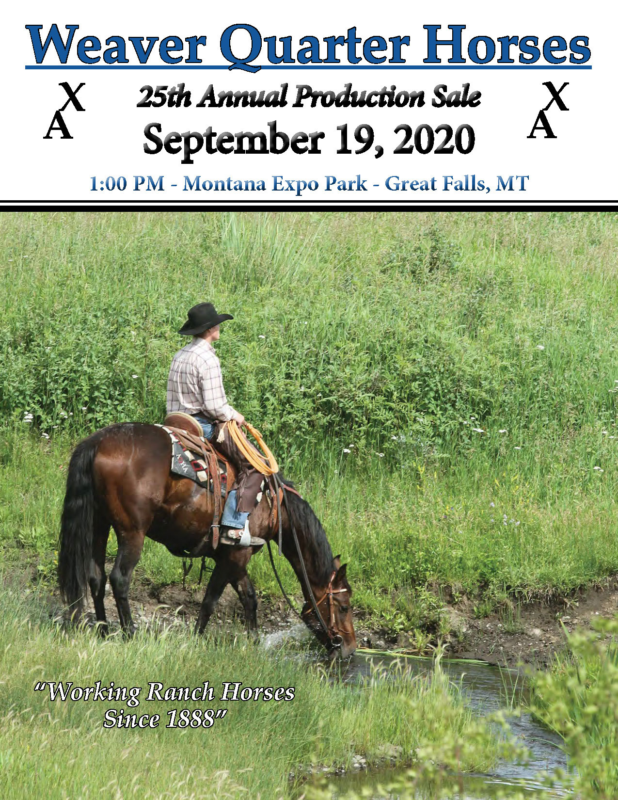 Weaver Quarter Horse Sale 2020 catalog