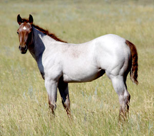 Weaver Quarter Horse Sale